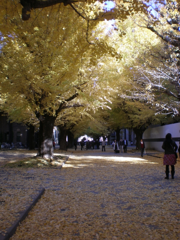 f:id:rihitomitsunaga:20111206070838j:image:w458