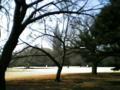 新宿御苑。向こうには、NTTdokomo代々木ビル。