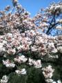 新宿御苑内。桜?にしては早いから、梅?桃??