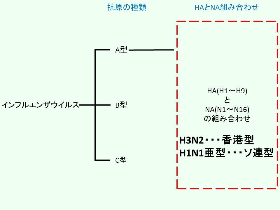 インフルエンザウイルスの香港型とソ連型の分類