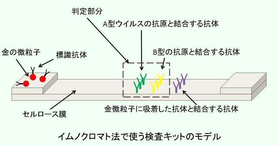 イムノクロマト法で使う検査キットのモデル