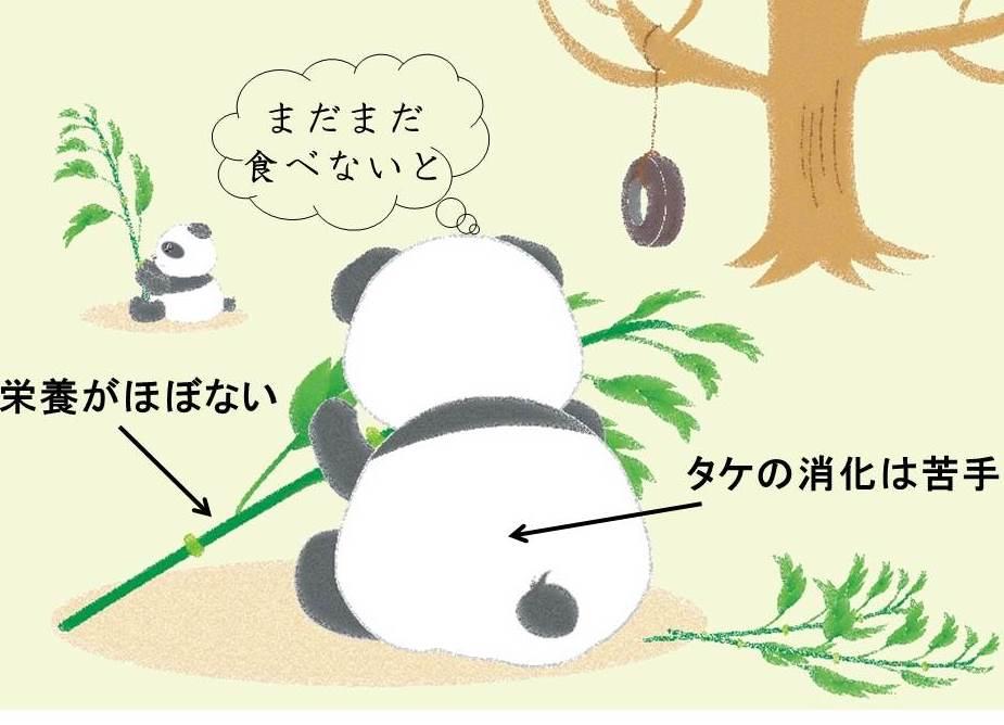後ろを向いたパンダと横を向いたパンダと木のイラスト