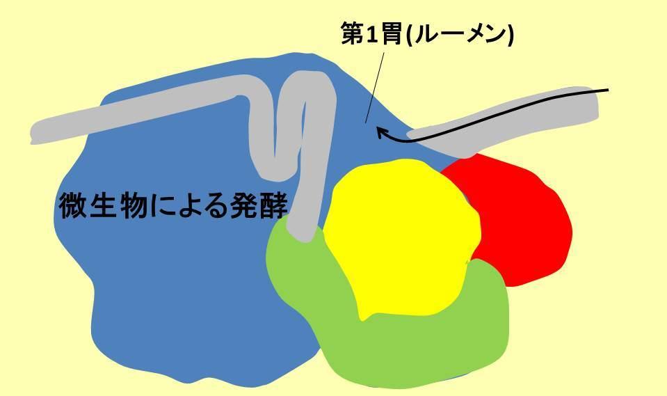 ウシの4つの胃と第1胃の役割説明