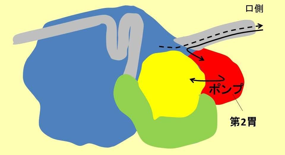 ウシの4つの胃と第2胃の役割説明