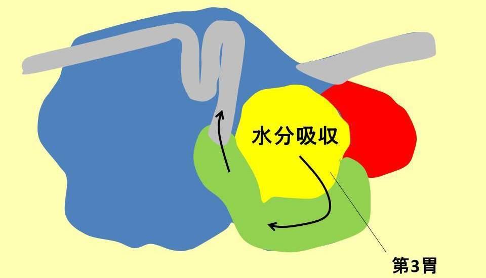 ウシの4つの胃と第3胃の役割説明