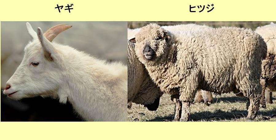 ヤギの上半身と毛むくじゃらのヒツジ