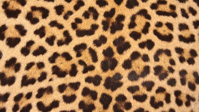 ヒョウの毛皮の模様