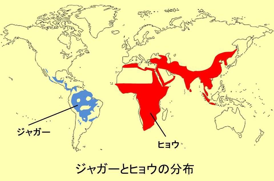 ヒョウとジャガーの生息地に色を付けた世界地図