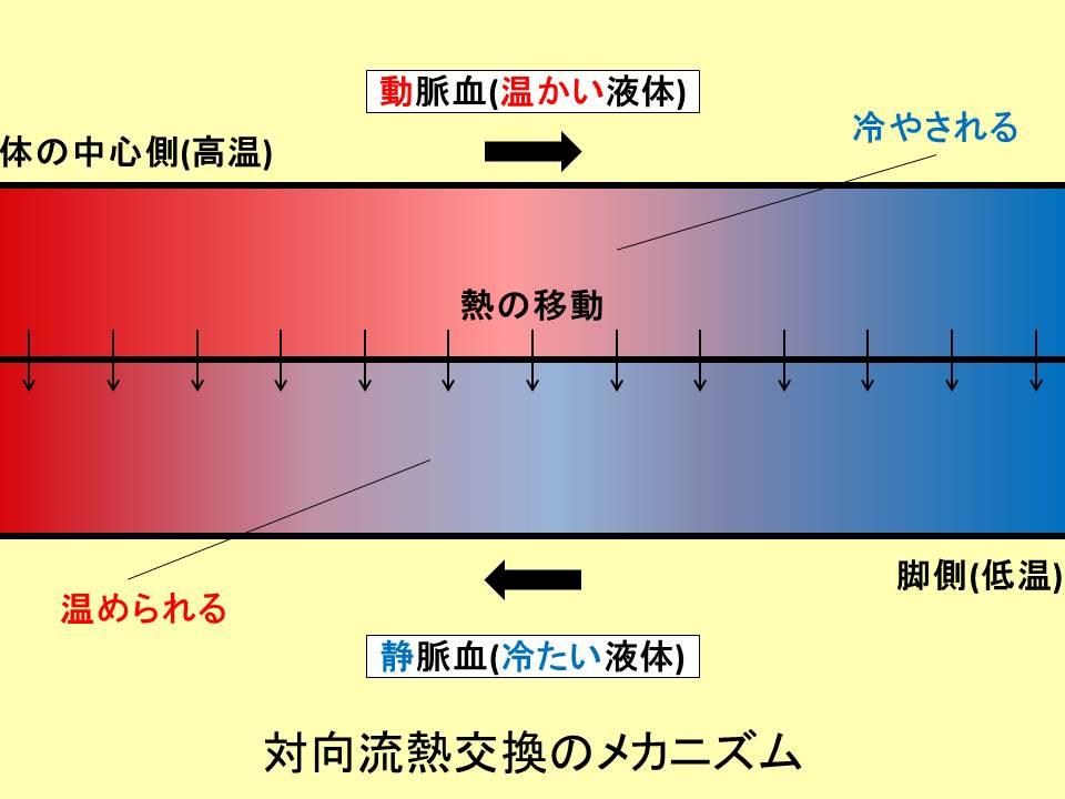 対向流熱交換のメカニズムを説明する図