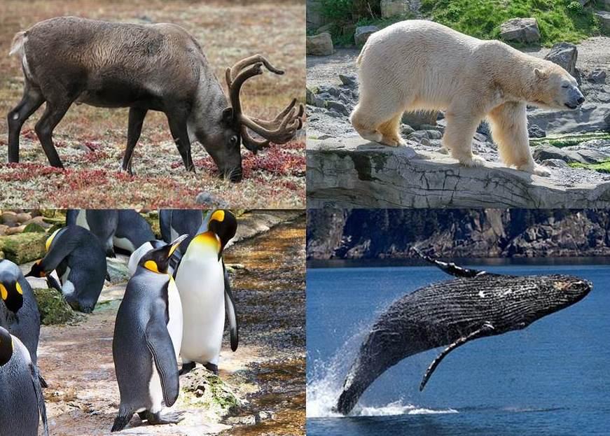 トナカイ、ホッキョクグマ、ペンギン、ザトウクジラの写真
