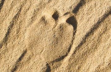 砂地の上についたラクダの足跡
