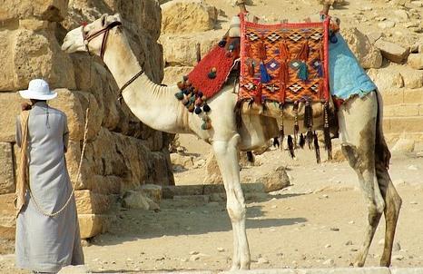 背中のこぶに布を付けたラクダとそれを引く人