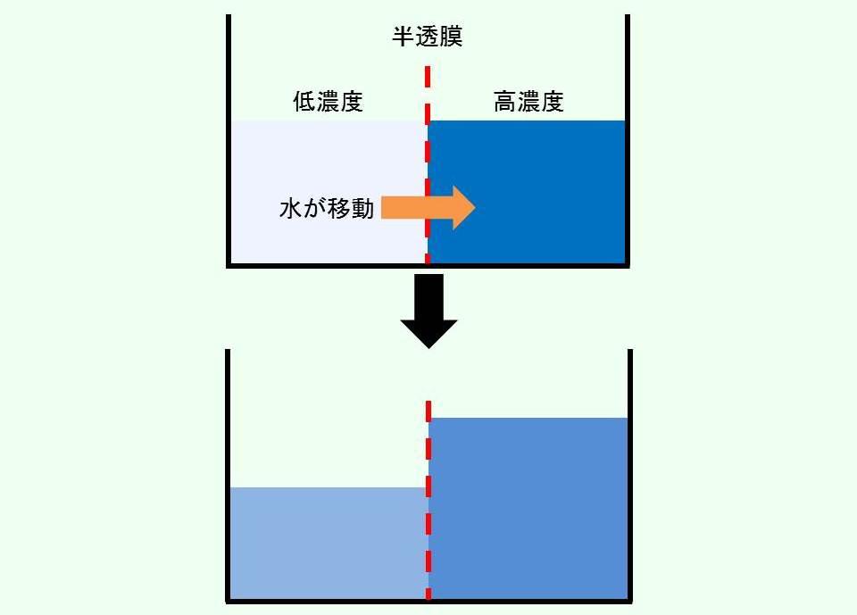 浸透を説明するイラスト