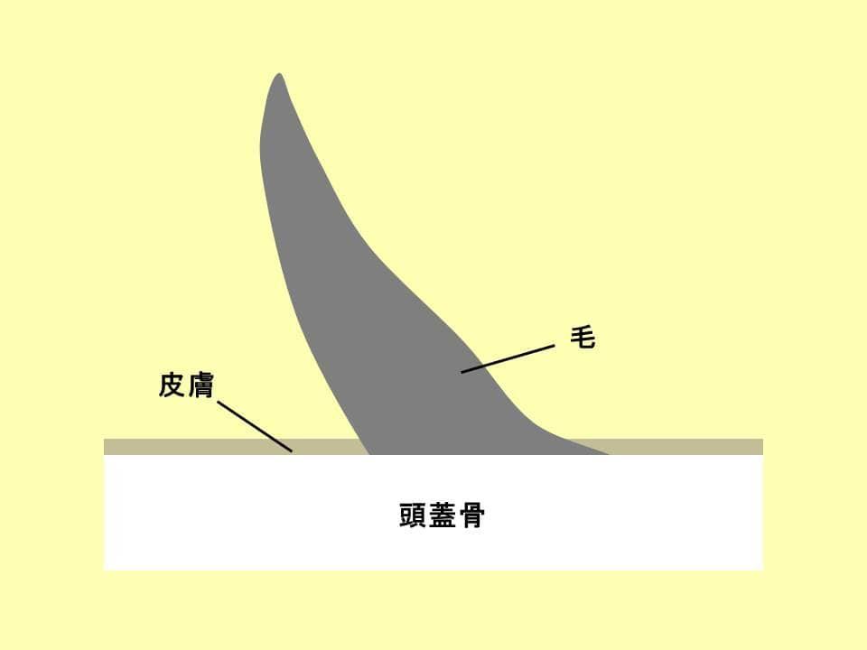 サイの角の構成を表すイラスト