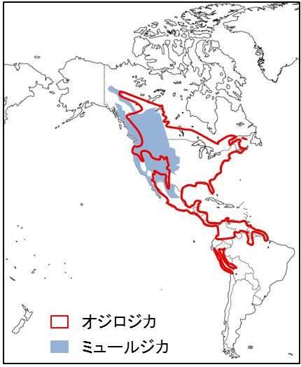 北アメリカ大陸と南アメリカ大陸が描かれた地図
