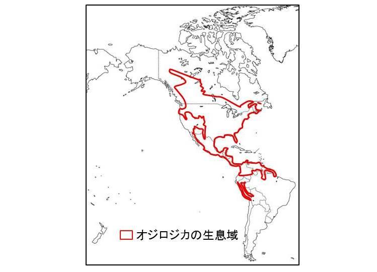 オジロジカの分布域を示す図