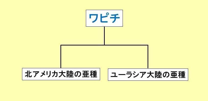 ワピチという単語を説明するための図