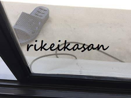 f:id:rikei-kasan:20180731142547j:plain