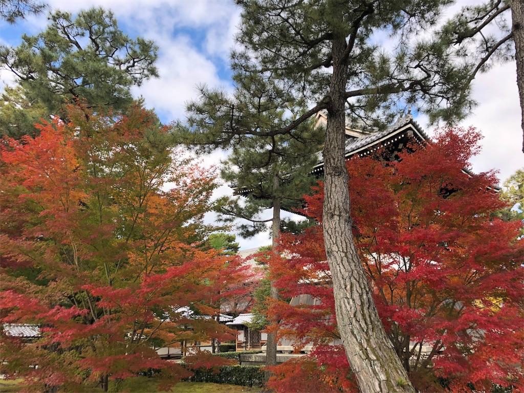 f:id:rikka-kyoto:20191123095513j:image