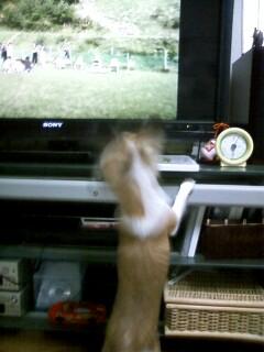 f:id:riku-mama:20091117191233j:image