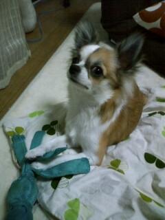 f:id:riku-mama:20091209195624j:image