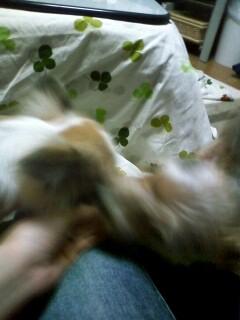 f:id:riku-mama:20091209195911j:image