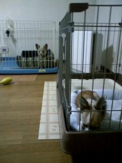 f:id:riku-mama:20091212223119j:image