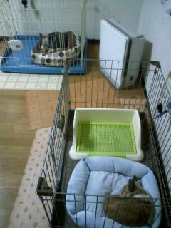 f:id:riku-mama:20100118171022j:image