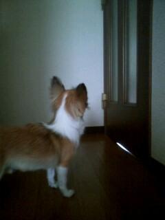 f:id:riku-mama:20100228092324j:image