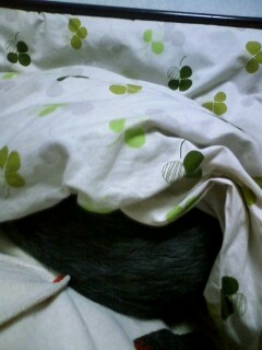 f:id:riku-mama:20100311213108j:image
