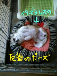 f:id:riku-mama:20100318161837j:image
