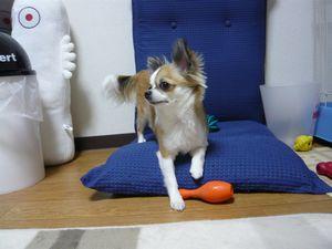 f:id:riku-mama:20100325211903j:image