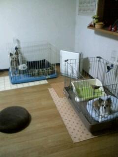 f:id:riku-mama:20100401213210j:image