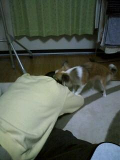 f:id:riku-mama:20100405210401j:image