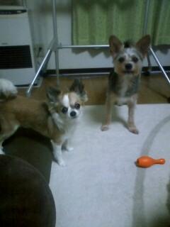 f:id:riku-mama:20100512200415j:image