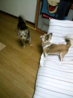 f:id:riku-mama:20100516205151j:image