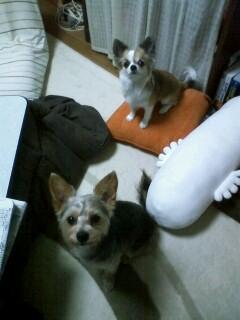 f:id:riku-mama:20100524183651j:image