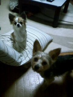 f:id:riku-mama:20100612211540j:image