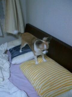 f:id:riku-mama:20100629191339j:image