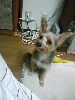 f:id:riku-mama:20100725200442j:image