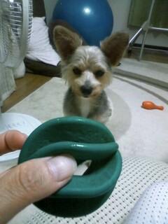 f:id:riku-mama:20100917195117j:image