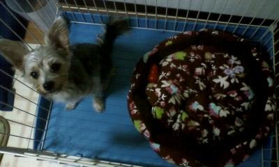 f:id:riku-mama:20101102215730j:image