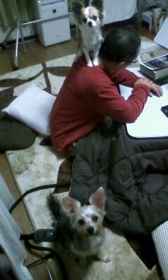 f:id:riku-mama:20101105205120j:image