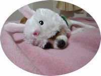 f:id:riku-mama:20101204191422j:image