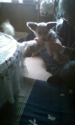 f:id:riku-mama:20110109125633j:image