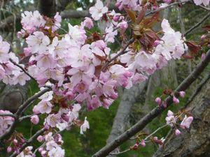 f:id:riku-mama:20110508143807j:image