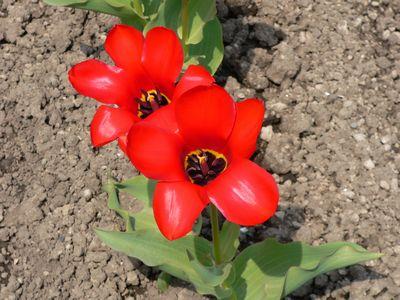 f:id:riku-mama:20110516095402j:image