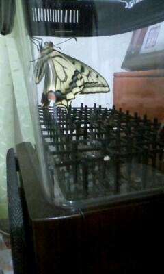 f:id:riku-mama:20110526211941j:image