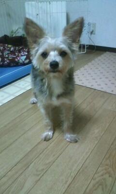 f:id:riku-mama:20110614205856j:image