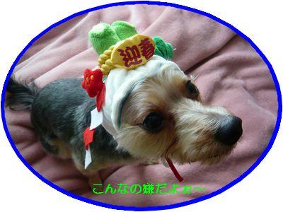 f:id:riku-mama:20111211115005j:image